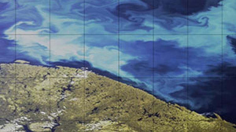 Phytoplankton Blooms spotted by Sentinel-3